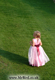Bridesmaid in pink dress on green grass